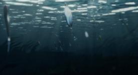 big-fish-004