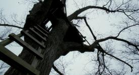 treeoflife-038
