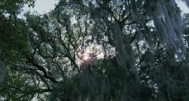 treeoflife-087
