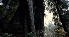 treeoflife-161