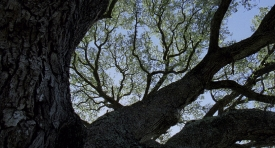 treeoflife-177