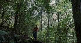 treeoflife-436