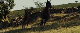 warhorse011