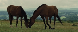 warhorse015